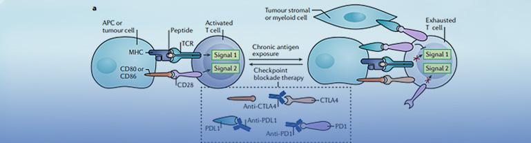 免疫治疗PD-L1检测服务与伴随诊断产品全面布局