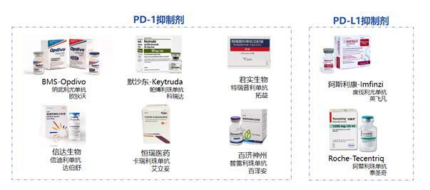 国内已上市PD-1PD-L1抗体药物
