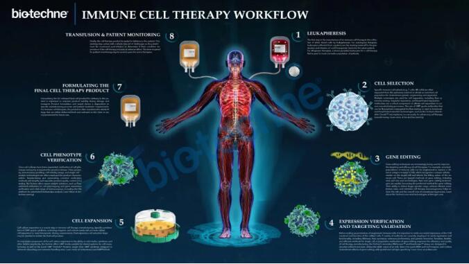 细胞免疫治疗流程