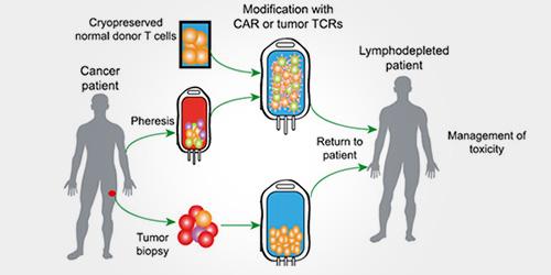 细胞治疗生物标志物